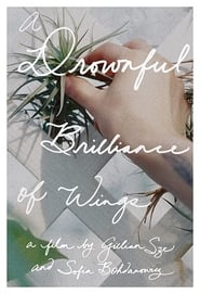 A Drownful Brilliance of Wings 2016