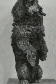 فيلم The Race for the Sausage 1907 مترجم أون لاين بجودة عالية