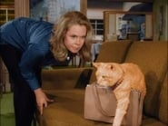 """""""Bewitched"""" The Catnapper"""