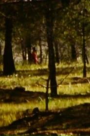 La forêt en streaming sur streamcomplet