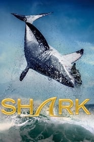 Shark streaming sur zone telechargement