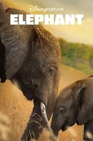 Elephant sur extremedown
