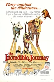 The Incredible Journey (1963) Assistir Online