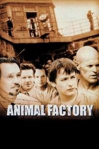 copertina film Animal+Factory 2000