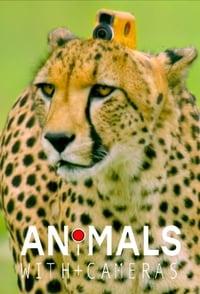 copertina serie tv Animals+with+Cameras 2018