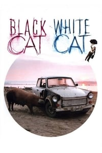 Crna mačka, beli mačor