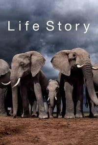 copertina serie tv Life+Story 2014