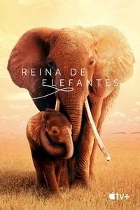 Reina de elefantes (2019)