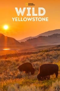 copertina serie tv Destination+Wild%3A+Yellowstone 2015