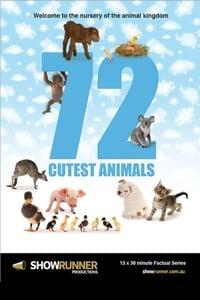 copertina serie tv 72+animali+tenerissimi 2016
