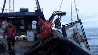 Deadliest Catch S12E02