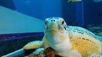 The Aquarium Season 1 Episode 1