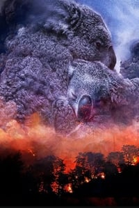 Wild Australia: After the Fires