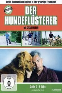 Dog Whisperer S03E20