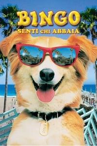 copertina film Bingo+-+Senti+chi+abbaia 1991