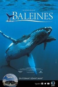 Baleines (2015)