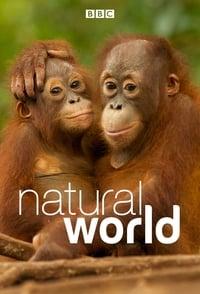 Natural World (1983)