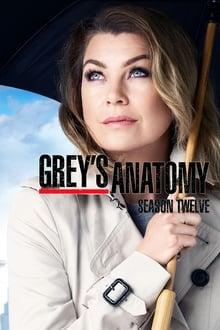 Grey's Anatomy (2015) Season 12
