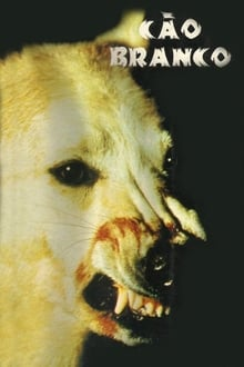 Cão Branco Torrent (1982) Dual Áudio / Dublado BluRay 1080p – Download