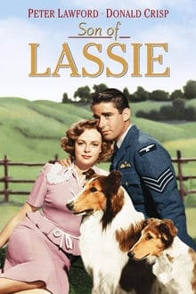Son Of Lassie 1945