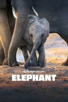 Elephant streaming VF