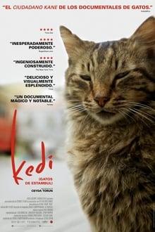 Stambulo katės / Kedi