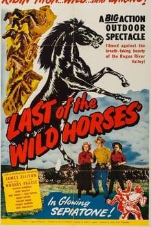 Last of the Wild Horses