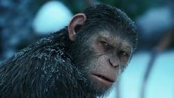 Ultimo trailer online Pelicula La guerra del planeta de los simios