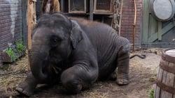 Vision de Zoo pelicula online