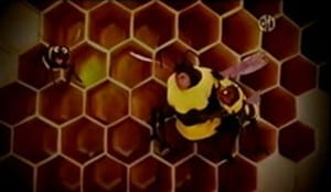 Backdrop image for Baby Bear is Afraid of Bees