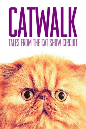 Catwalk: Tales from the Catshow Circuit 2018