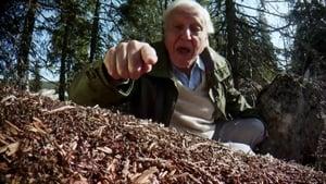 مشاهدة فيلم David Attenborough's Ant Mountain مترجم