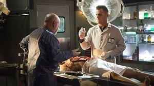 CSI: Crime Scene Investigation: 15×14