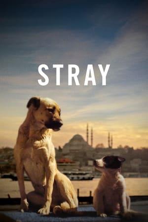 Stray (2020)              2020 Full Movie