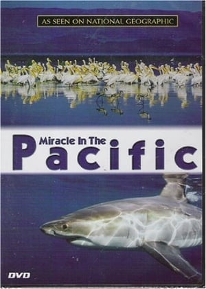 Image Miracle in the Pacific