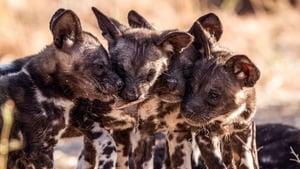 Serengeti: Season 1 Episode 6 S01E06
