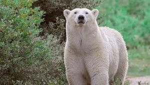 Königreich der Eisbären
