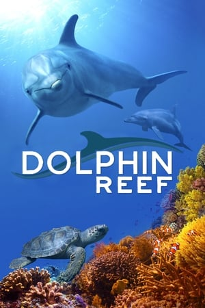 Watch Dolphin Reef Full Movie