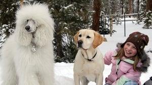 A kutya, aki megmentette a karácsonyt