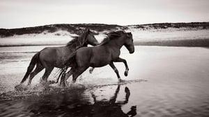 Stronghold of Resistance: Sable Island & Her Legendary Horses online cda zalukaj