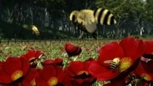 Thomas & Friends Season 13 :Episode 19  Buzzy Bees