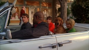 Pushing Daisies 1×6