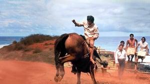 A partra vetett cowboy