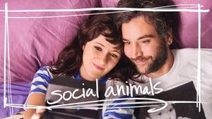 Social Animals mystream