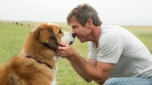 A Dog's Purpose (2017), film online subtitrat in Romana