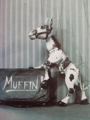 Image Muffin the Mule