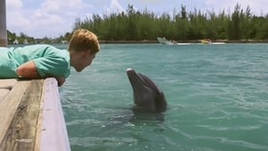 Dolphin Kick – Legendado