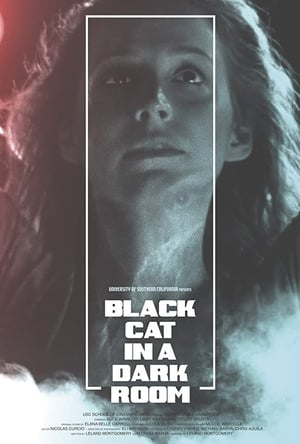 Black Cat in a Dark Room