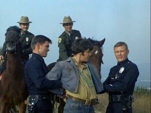 Log 062: Grand Theft Horse?