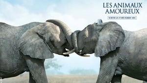 Animals In Love – Les Animaux Amoureux